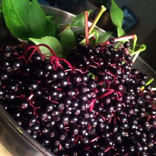 How To Make An Elderberry Shrub Aka A Drinking Vinegar