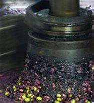Transformation des olives en huile