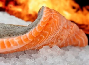 Major Grocery Retailers Reject Genetically Engineered Fish   myfoodistry