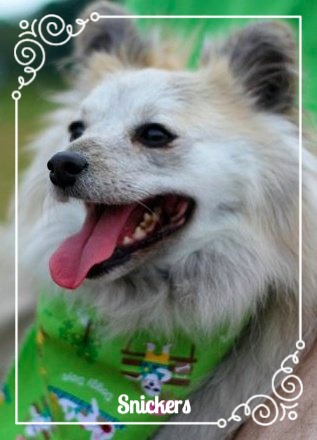 dog smiling in a green bandana outside home sweet home snickers puppy kristi mcallister truly madly sassy
