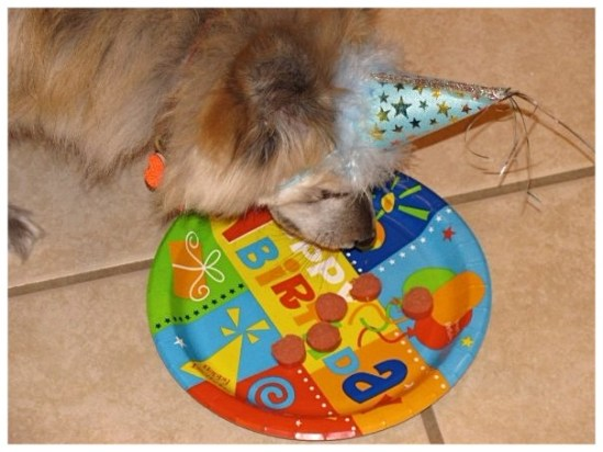 dog in a  blue birthday party hat
