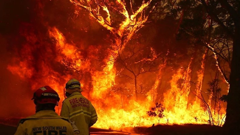 firefighters fighting bushfire