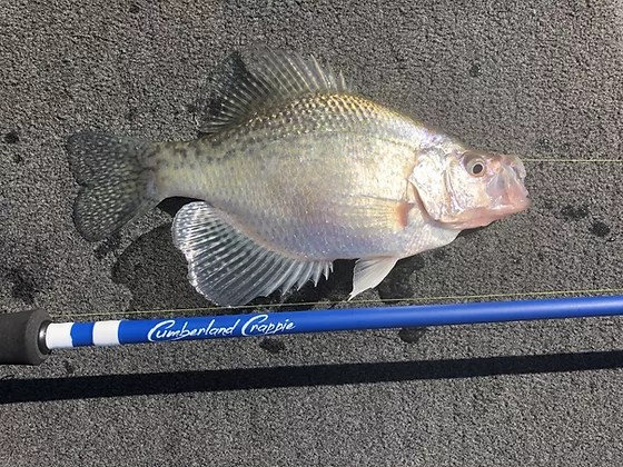 Available in single double pictured or triple. Crappie Fishing Cumberland Crappie United States