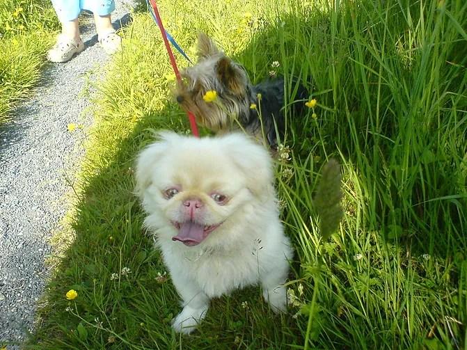 cachorro albino