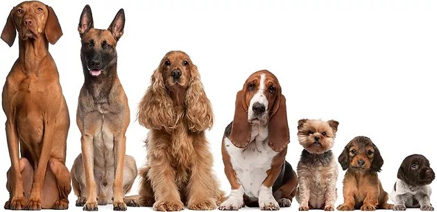 substances and products that will be beneficial to numerous breeds of dogs