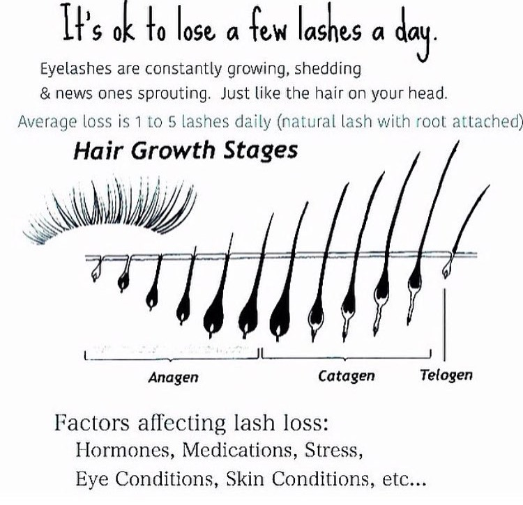 Growth Hair Anagen Phase