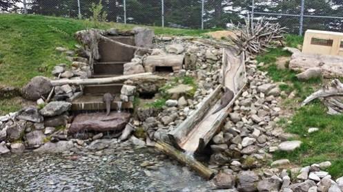 Les loutres grignotant leurs poissons dans leur habitat