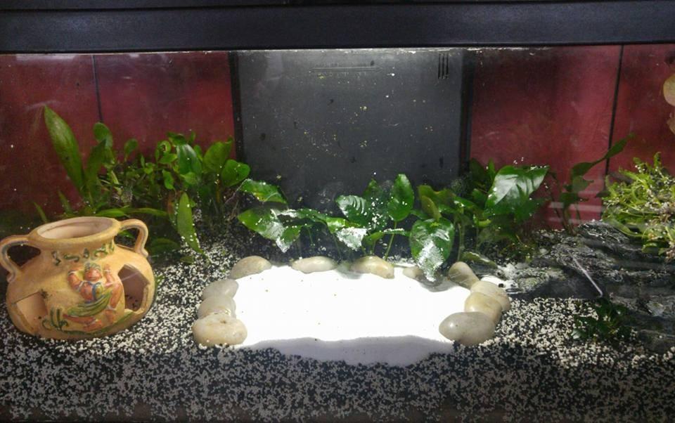 5328 galets naturels pour aquarium pierre de lune de beatrice 106628803257b9e8826c1283 19750164