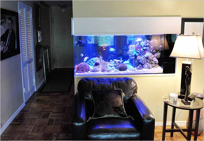 Home Aquariums As Decorating Elements The New York Times