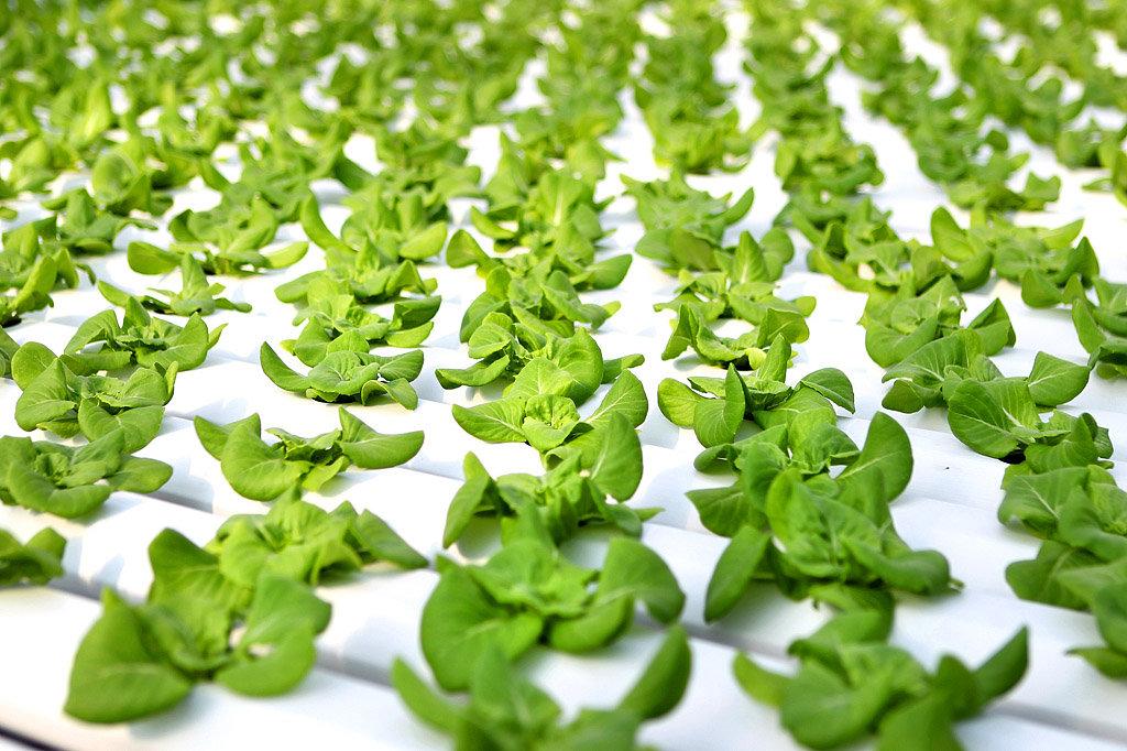 Fresh Greens New York