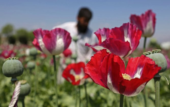 https://i2.wp.com/static01.nyt.com/images/2014/06/27/world/27poppies1_now/27poppies1_now-articleLarge.jpg?resize=668%2C423&ssl=1