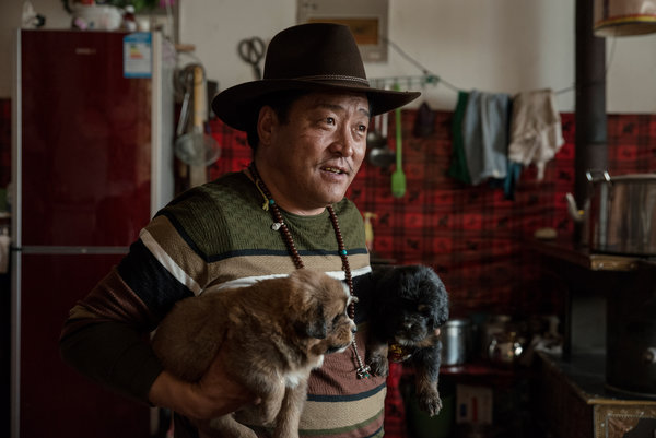Gombo, a veteran breeder in China's northwestern province of Qinghai, with mastiff puppies.CreditGilles Sabrie for The New York Times.  One is a tan-ish-brown while the other is black, both super adorable and looks well-fed