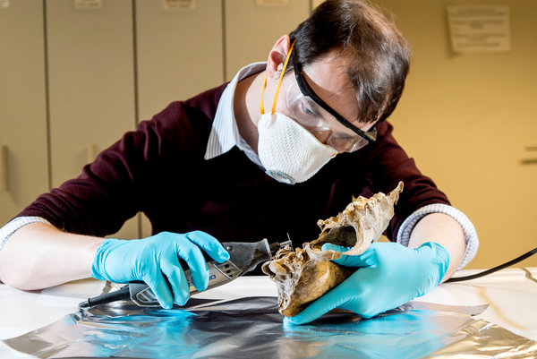 Janeiro 2016 uma incerta antropologia arden hulme beaman cutting a piece from an ancient skull for dna testing at the royal belgian institute of natural sciences in brussels fandeluxe Images