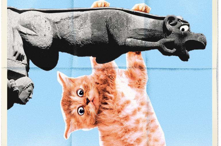 比利時小鎮的「拋貓節」(英文) - 紐約時報中文網