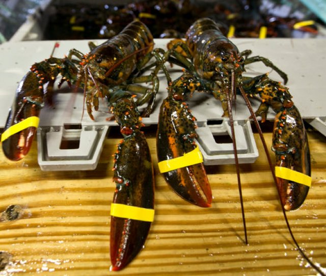 Image Charlottes Legendary Lobster