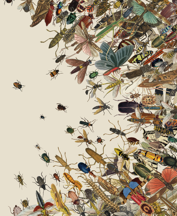 The Insect Apocalypse Is Herethe Insect Apocalypse Is Here