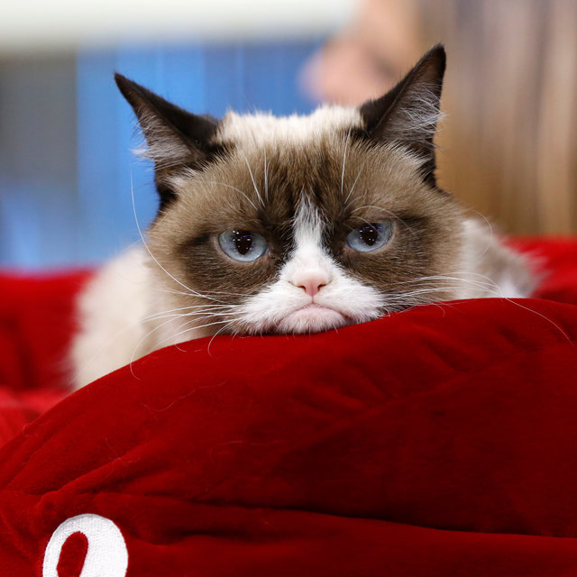 Grumpy Cat S Death Marks The End Of The Joyful Internet Wired