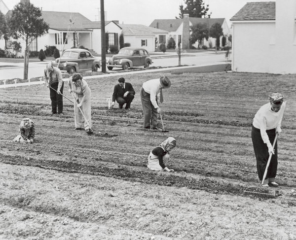During World War II, some 20 million victory gardens were planted in the United States.