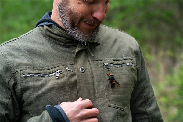 """""""This is our window to keep it from establishing,"""" Chris Looney, a Washington State entomologist, said of the two-inch Asian giant hornet. He displayed a dead hornet on his jacket."""