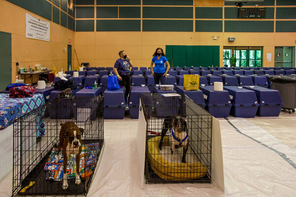 A pet shelter in preparation for Hurricane Isaias in Lake Worth, Fla., on Saturday.