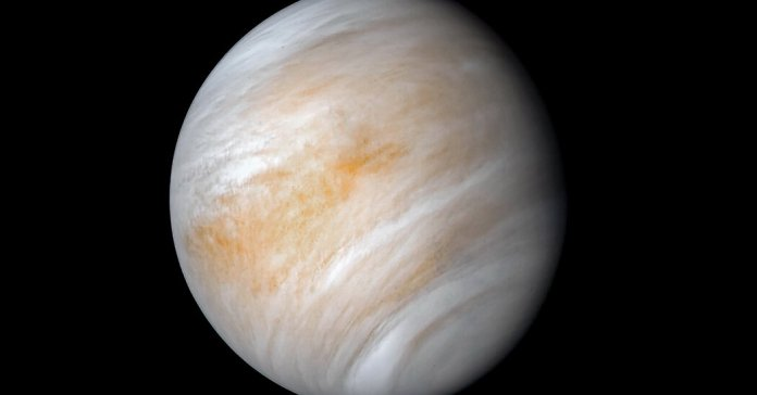 On Venus, Cloudy With a Chance of Microbial Life