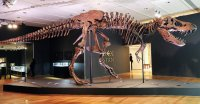 T. Rex Skeleton Brings .8 Million at Christie's Auction