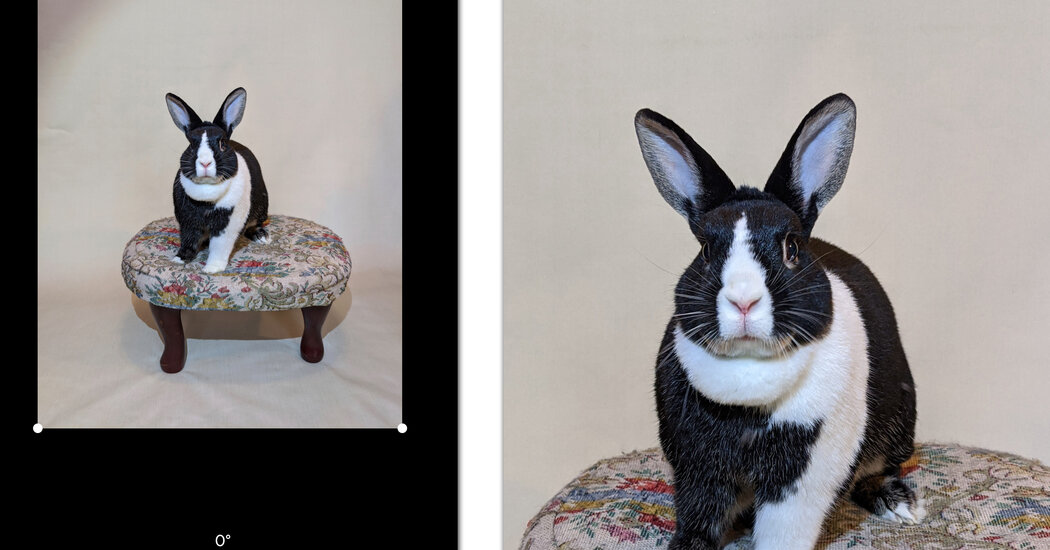 How to Take Better Pet Portraits