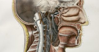 Doctors May Have Found Secretive New Organs in the Center of Your Head