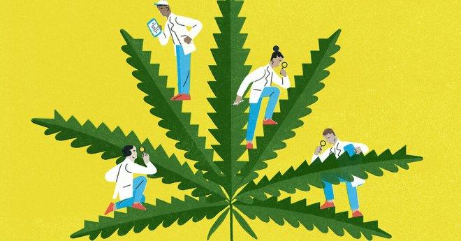 Do You Have the Heart for Marijuana?