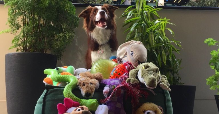 Who Will Win the 'Genius Dog Contest?' Watch the Competition Begin