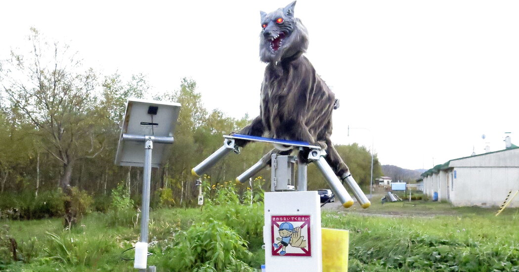 To Scare Off Wild Bears, Japanese City Calls In the 'Monster Wolf'