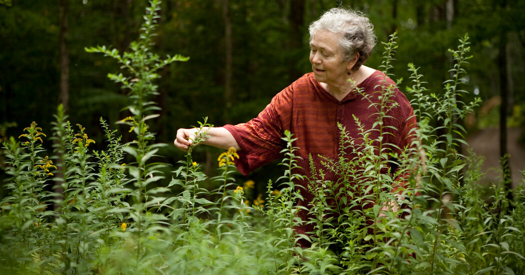Mary Catherine Bateson Dies at 81; Anthropologist on Lives of Women
