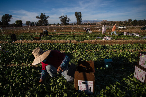 Riverside County in Southern California is the first in the nation to prioritize Covid-19 vaccines for farmworkers on a large scale.