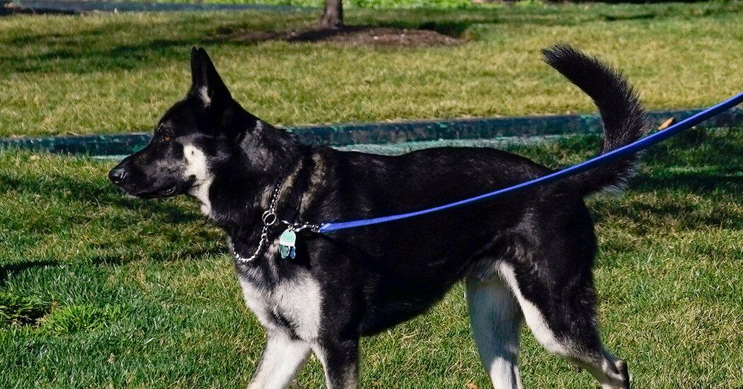 Biden's Dog Major 'Nipped Someone,' Spokesman Says