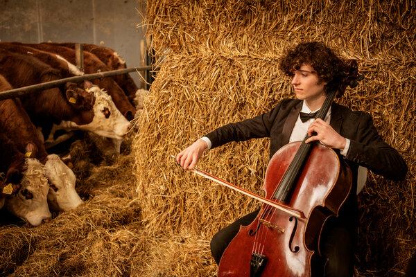 """""""Es realmente agradable tocar para las vacas"""", dijo Johannes Gray. """"Realmente se acercan a ti. Y tienen preferencias""""."""