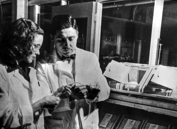 Helen and Al Free at Miles Laboratories in Indiana (later acquired by Bayer).The paper-strip test they developed made it easier for clinicians to diagnose diabetes and cleared the way for home test kits.