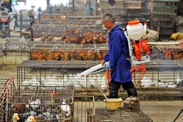 Sterilizing a poultry market in Wuhan, China, in 2013. The Chinese government  on Tuesday announced the world's first human case of the H10N3 strain of bird flu.