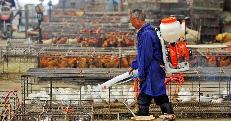 China Reports a Human Case of Rare H10N3 Bird Flu