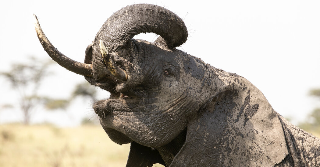 What Has Four Legs, a Trunk and a Behavioral Database?