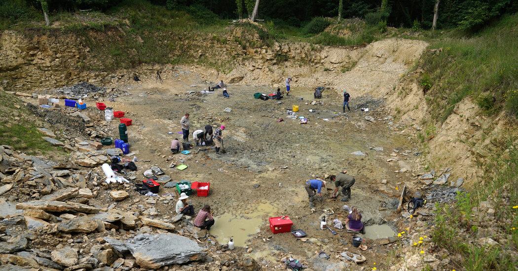 Amateur Fossil Hunters Make Rare Find in U.K. Using Google Earth