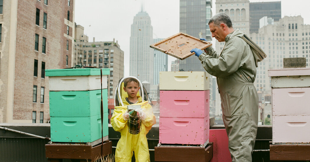 Why Beekeeping Is Booming in New York: 'A Hive Is a Box of Calm'
