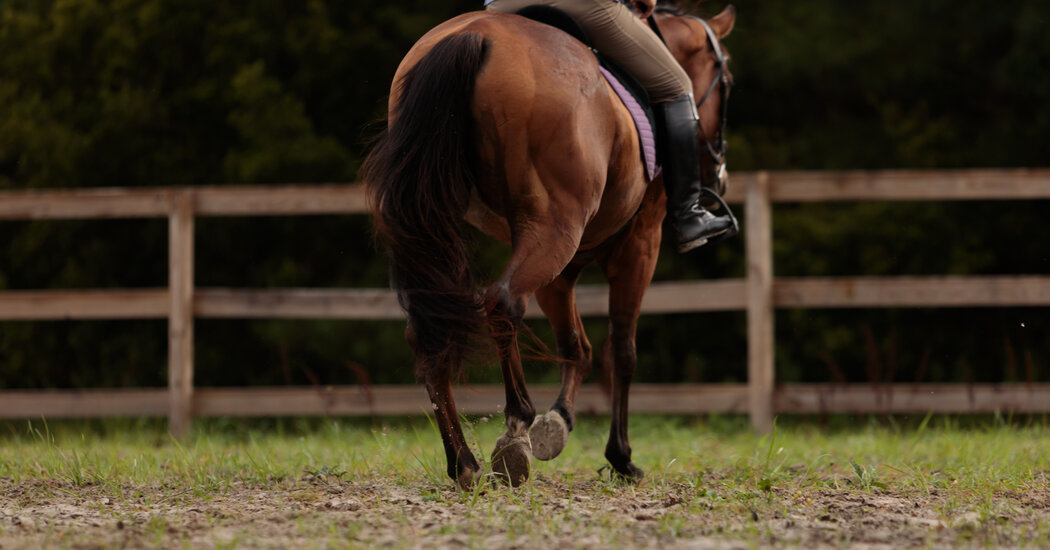 It's Never Too Late to Learn to Ride Horseback