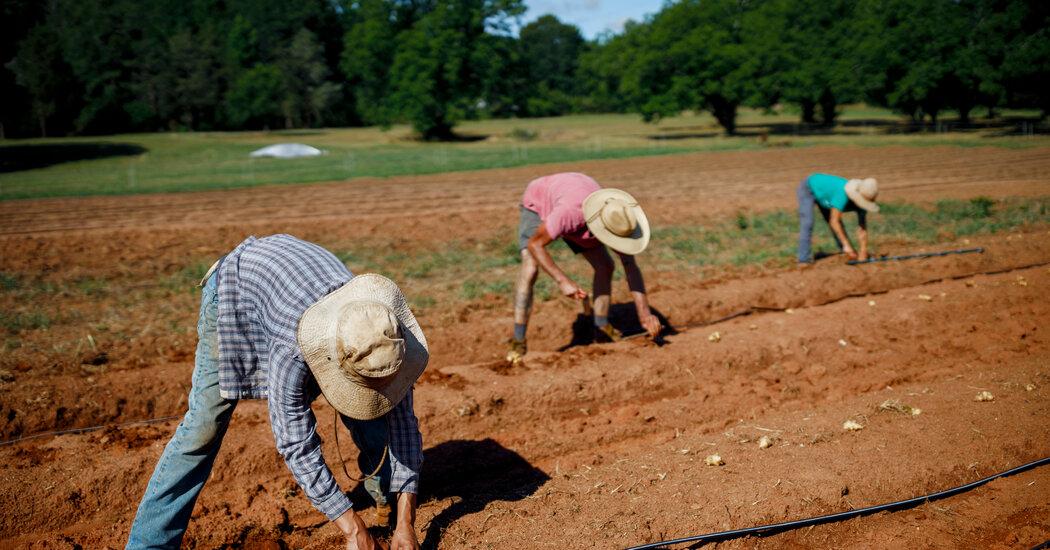How to Make a Neighborhood Farm for an Entire Metropolis