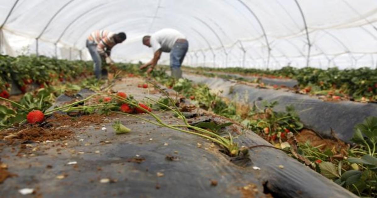trabajos campo andalucia U10192415362NJC