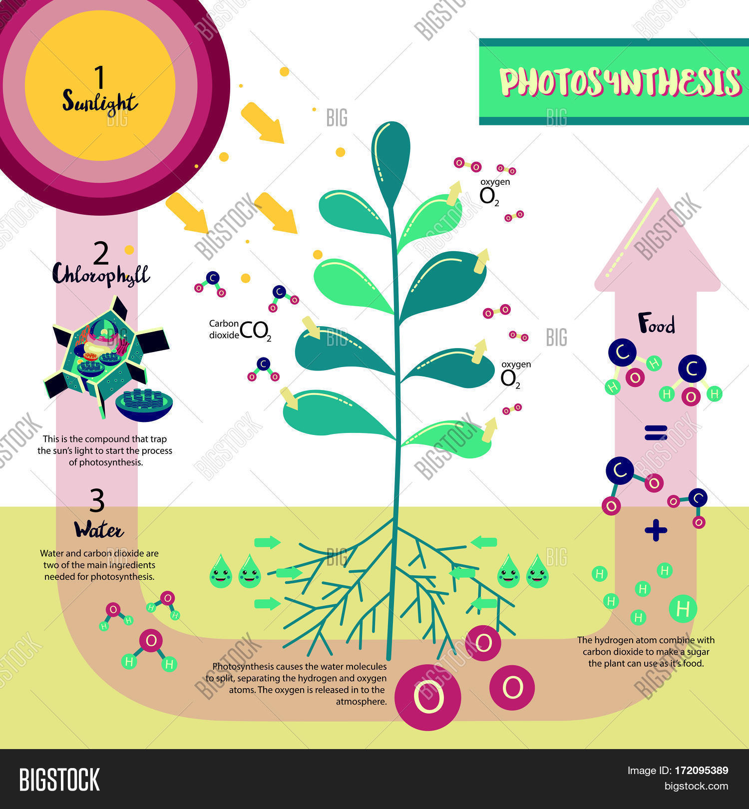 Photosynthesis Vector Amp Photo Free Trial