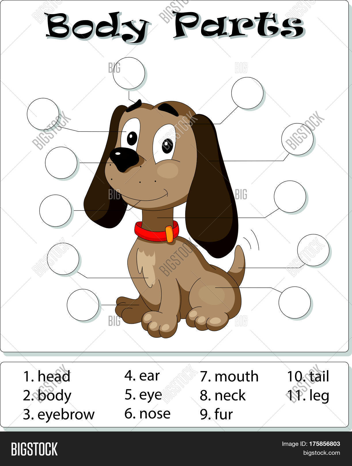 Dog Body Parts Vector Amp Photo Free Trial