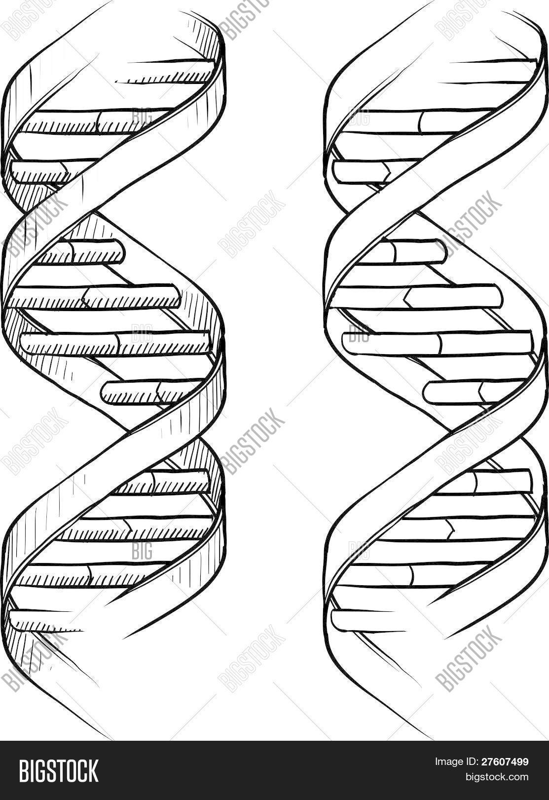 Dna Double Helix Vector Amp Photo Free Trial