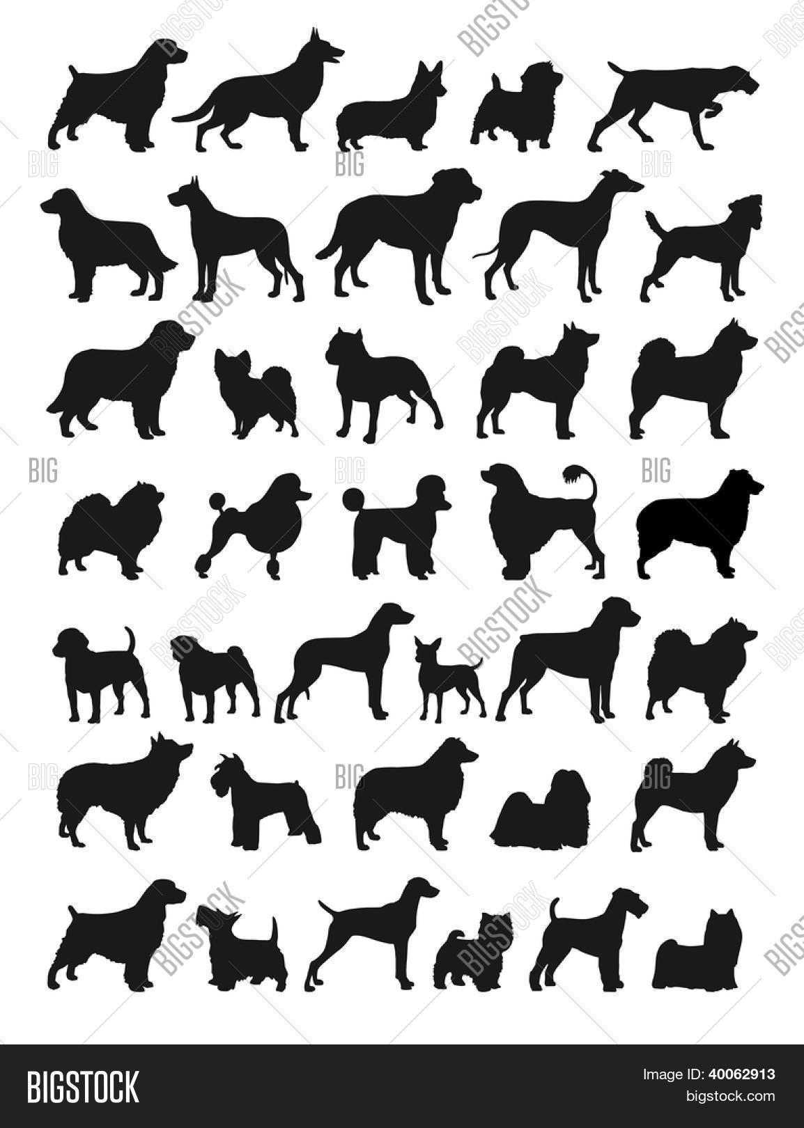 Many Dog Breeds Silhouettes Vector Amp Photo