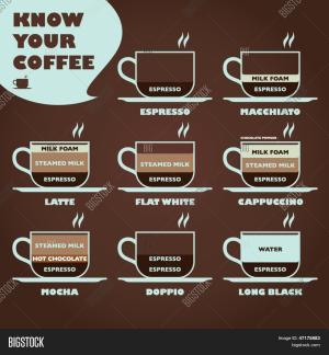 Know Your Coffee Diagram Vector & Photo   Bigstock