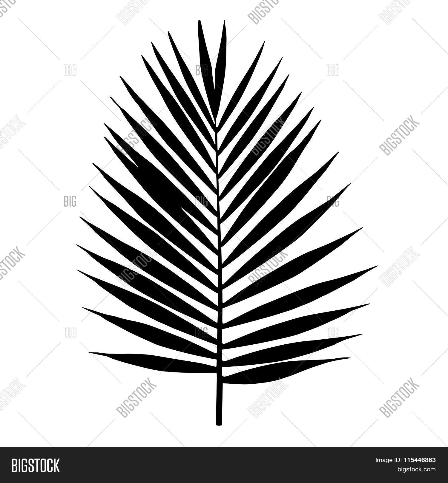 Palm Leaf Silhouette Vector Vector Amp Photo